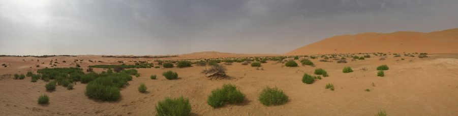 De Zandveger Annechien Lubbers